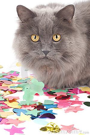 Cat with coloured decoration for party