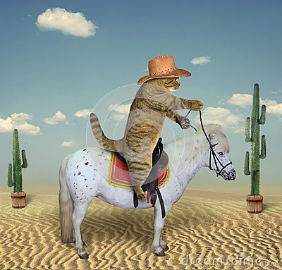 Free Cat Cowboy On A Horse 3 Royalty Free Stock Photo - 122134765