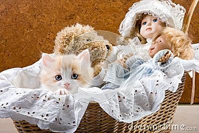 Cat in a cradle