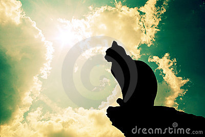 Cat and deep sky