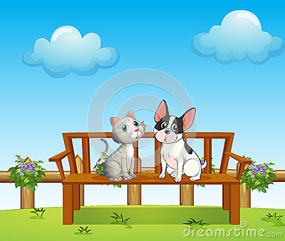 A cat and a dog at the bench