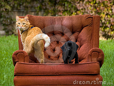 Cat dog and a chair
