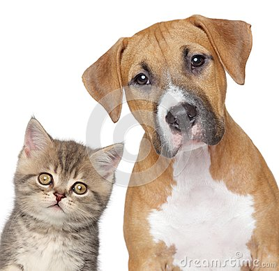 Cat and dog. Close-up portrait