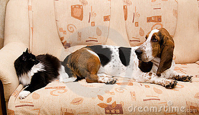 Cat and dog on the couch