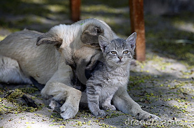 Cat and dog are friend