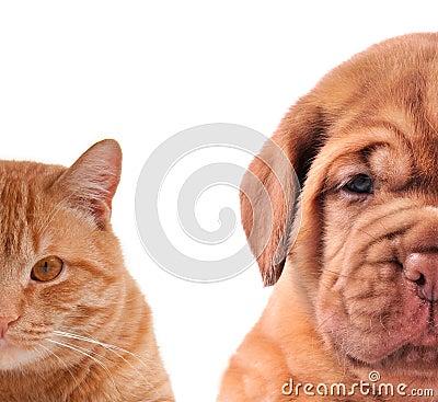 Cat and Dog-half of muzzle closeup portraits