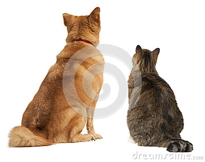 Cat and dog looking up