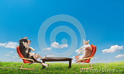 Cat and dog relaxing