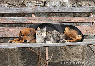 Cat and dog are resting