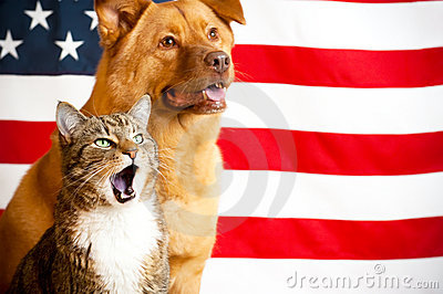 Cat And Dog With US Flag Stock Images - Image: 14602514