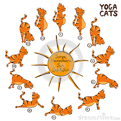 cat doing yoga position of surya namaskara stock vector