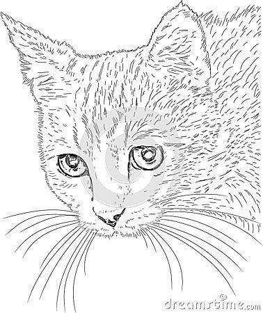 Free Cat Drawing Stock Image - 18102441