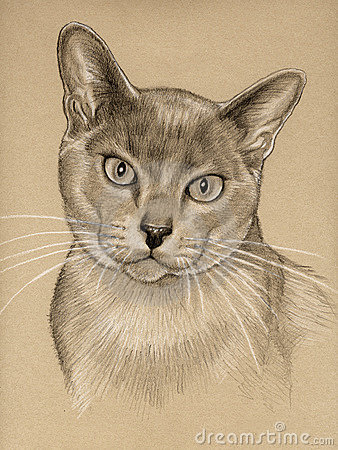 Cat Drawing Sketch Royalty Free Stock Photography Image