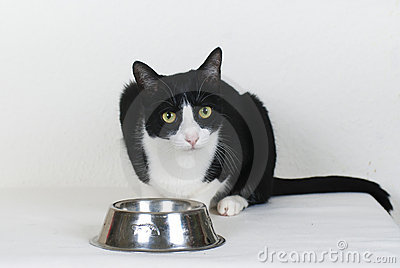 Cat with empty food bowl