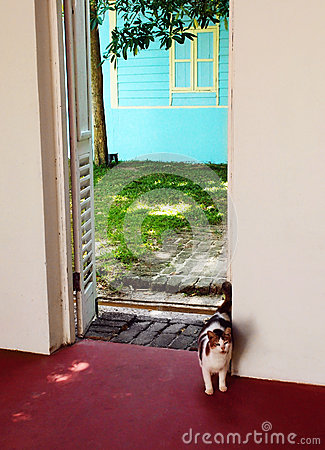 Cat entering door way