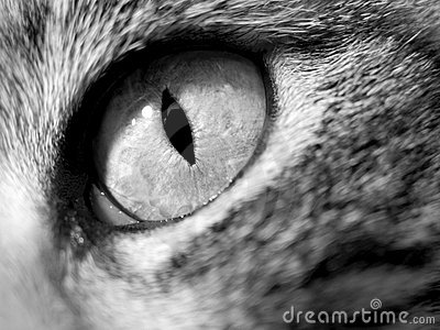 Cat Eye - Close-Up