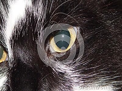 Cat Eye s