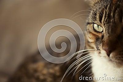 Cat Eye Side View