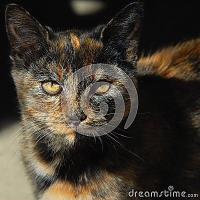 Cat Eyes in Amber