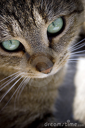 Free Cat Face Royalty Free Stock Photo - 5806035