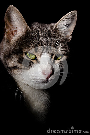Cat face on black shadows