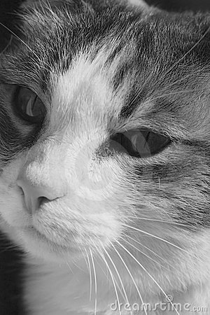 Cat face black and white