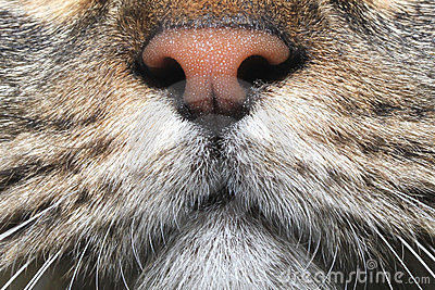 Cat face closeup