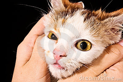 Cat face in hand