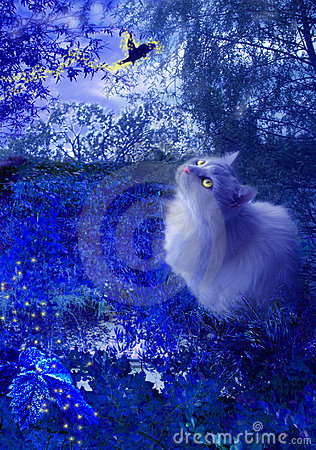 Cat and fairy bird at night Stock Photo