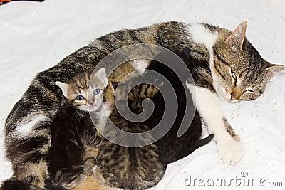 Cat feeding kittens