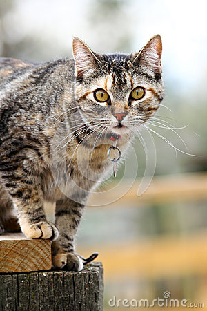 Cat On A Fence Royalty Free Stock Image - Image: 25297266