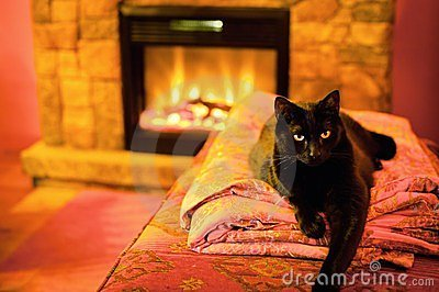 Cat By A Fireplace Stock Images Image 23607144