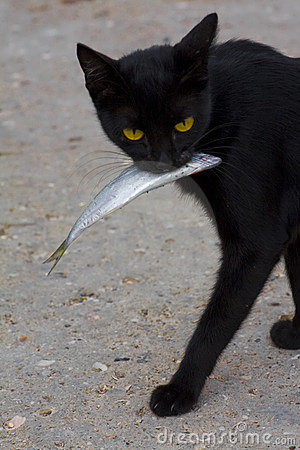 Cat And Fish Royalty Free Stock Photography - Image: 21592777