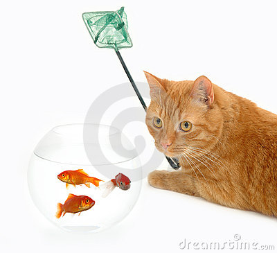 Free Cat Fish And Net Stock Images - 1745324