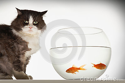 Cat By Fishbowl With Two Goldfish
