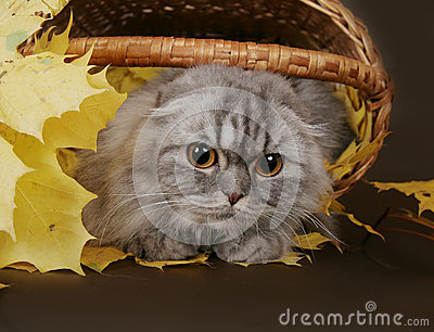 Cat fold in the basket with leaves