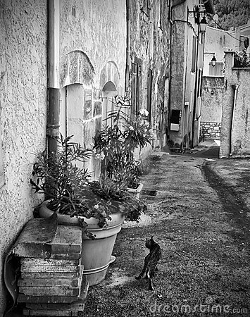 Cat in French old town street