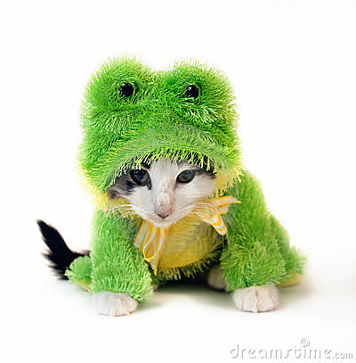Cat in a frog animal suit. Keywords: