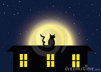 The cat and full moon