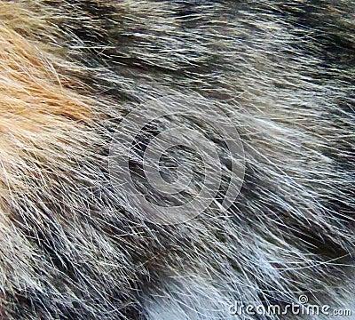 Cat fur close up