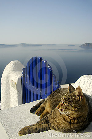 Cat on Gate in Santorini, Greece