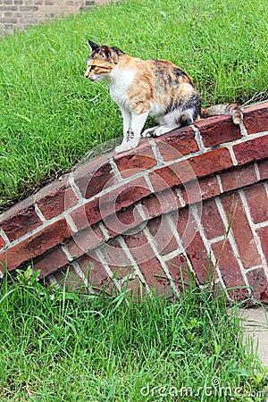 Cat gaze ahead