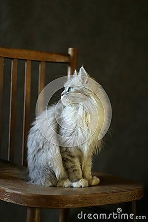 The cat - girl