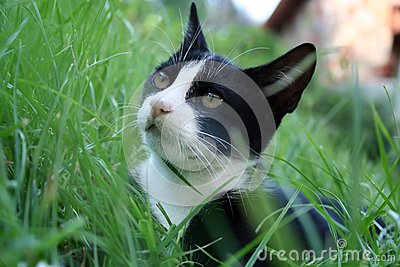Cat on the grass.