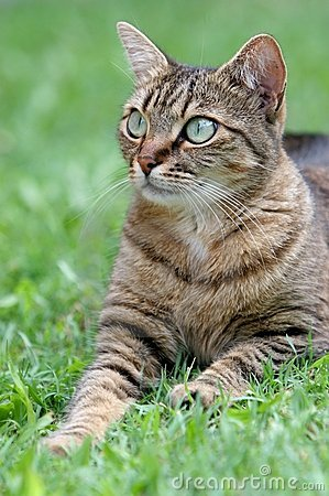 Cat on the grass portrait
