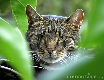 Cat in the greenery