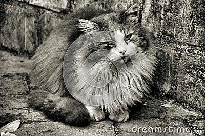 Cat HDR