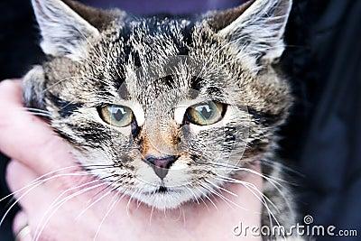 Cat held in hand