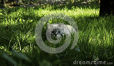 Cat hides in the grass