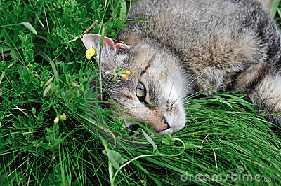 Cat hiding in grass